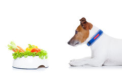 Hungry dog with healthy bowl Stock Image