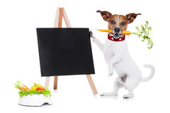 Hungry dog with healthy  vegan bowl Stock Images