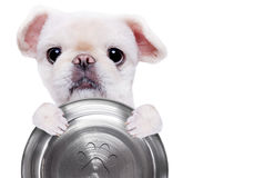 Hungry dog holding food bow. Stock Image