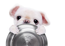 Hungry dog holding food bow. Stock Photo