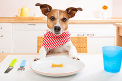 Hungry dog Royalty Free Stock Image