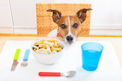 Hungry dog Stock Photos