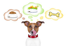 Hungry dog. Hungry jack russell dog thinking about the choice between food bowl, vegan bowl or a big bone , in 3 speech bubbles, isolated on white background royalty free stock images