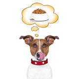 Hungry dog Royalty Free Stock Photography