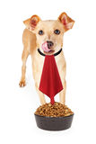 Hungry Dog With Napkin and Food Bowl Royalty Free Stock Images