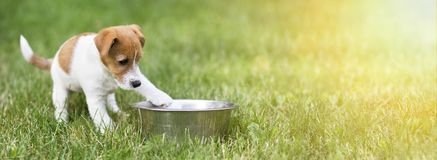Hungry dog puppy waiting for his food. Web banner with copy space royalty free stock photography
