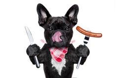 Hungry dog  with sausage Stock Image