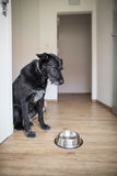 Hungry dog staring at his empty bowl Stock Photo