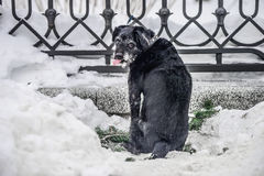 Hungry dog on the street. In Belarus Stock Image