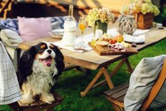 Hungry dog watching garden summer outdoor party with cheese and meat on wooden table. Decorated with candles and flowers royalty free stock photos