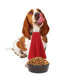 Hungry Dog Wearing Napkin With Food Bowl Stock Photos