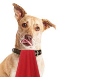 Hungry Dog Wearing Napkin Licking Lips. A cute hungry mixed breed dog wearing a red napkin while licking her lips Royalty Free Stock Photography