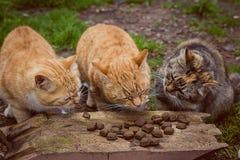 Three cats eat with pleasure. royalty free stock photo