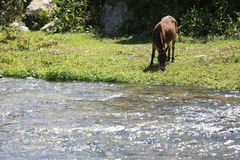 Hungry Donkey. Donkey having some lunch by the river Stock Images