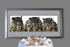 Hungry eagle owls. Framed picture with three eagle owls, looking hungry on the meat on a table stock photography