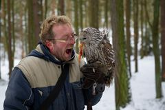 Hungry falconer with tawny owl on his glove, eating chicken reward. Trees in winter time royalty free stock images