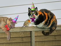 Hungry Festive Party Garden Feline Cats Royalty Free Stock Photography
