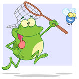 Hungry frog chasing fly with a net Royalty Free Stock Photo