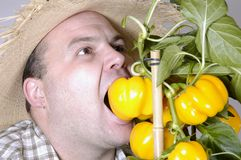 Hungry gardener Stock Images