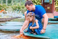 Hungry gold asian fish eats food from bottle in the pond. little beautiful girl with Dad feeds fish stock photography