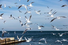 Hungry gulls circling over the winter beach in search of food on Royalty Free Stock Photography