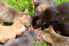 Hungry homeless cats. Royalty Free Stock Images
