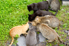 Hungry homeless cats. Royalty Free Stock Photography