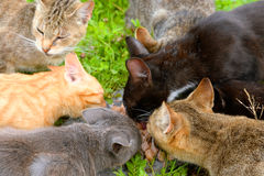 Hungry homeless cats. Stock Images