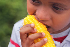 Hungry indian boy(kid) eating sweet corn(healthy food) Stock Photos