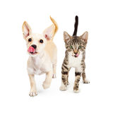 Hungry Kitten and Puppy Walking Forward Stock Photos