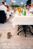 Hungry kitten in street restaurant food requests royalty free stock photos