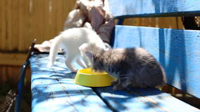 Hungry Kittens Royalty Free Stock Image