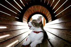 Hungry Kitty. My cat went down a barrel looking for some treats I placed Royalty Free Stock Images