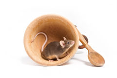 Hungry little mouse in an empty wooden bowl Royalty Free Stock Images