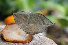 Hungry butterfly. Lunch in summer Royalty Free Stock Images