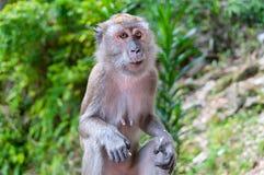 Hungry monkey Stock Photos