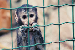 Hungry monkey. Monkey in the zoo eating some food with adorable look right in your eyes Stock Images