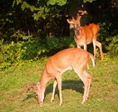 Hungry pair Royalty Free Stock Photo
