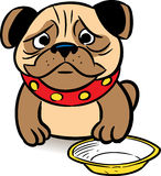 Hungry pug. The picture shows a sad puppy pug asks a meal in a bowl.Illustration is presented in cartoon style, on a white background Stock Photography