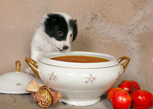 Hungry puppy Royalty Free Stock Photo