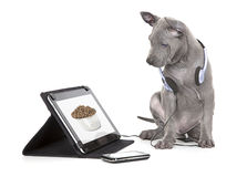 Hungry puppy looking at dog food Royalty Free Stock Photo
