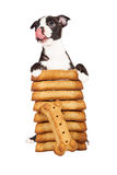 Hungry Puppy With A Stack Of Big Treats Royalty Free Stock Photos