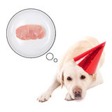 Hungry sad dog (golden retriever) in birthday hat dreaming about Stock Photography