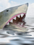 Hungry shark. A shark looking for lunch stock image