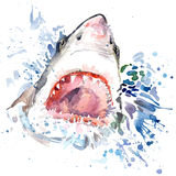 Hungry shark T-shirt graphics. shark illustration with splash watercolor textured background. unusual illustration watercolor hung