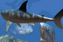 Hungry sharks in the caribbean sea stock image