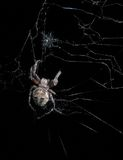 Hungry spider Stock Images