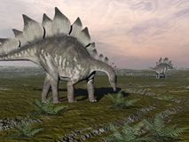 Hungry stegosaurus - 3D render Royalty Free Stock Photos