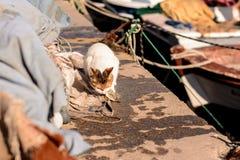 Hungry stray cat eats the caught sea fish Stock Photography