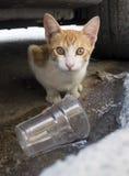 Hungry Stray Cat Royalty Free Stock Photo